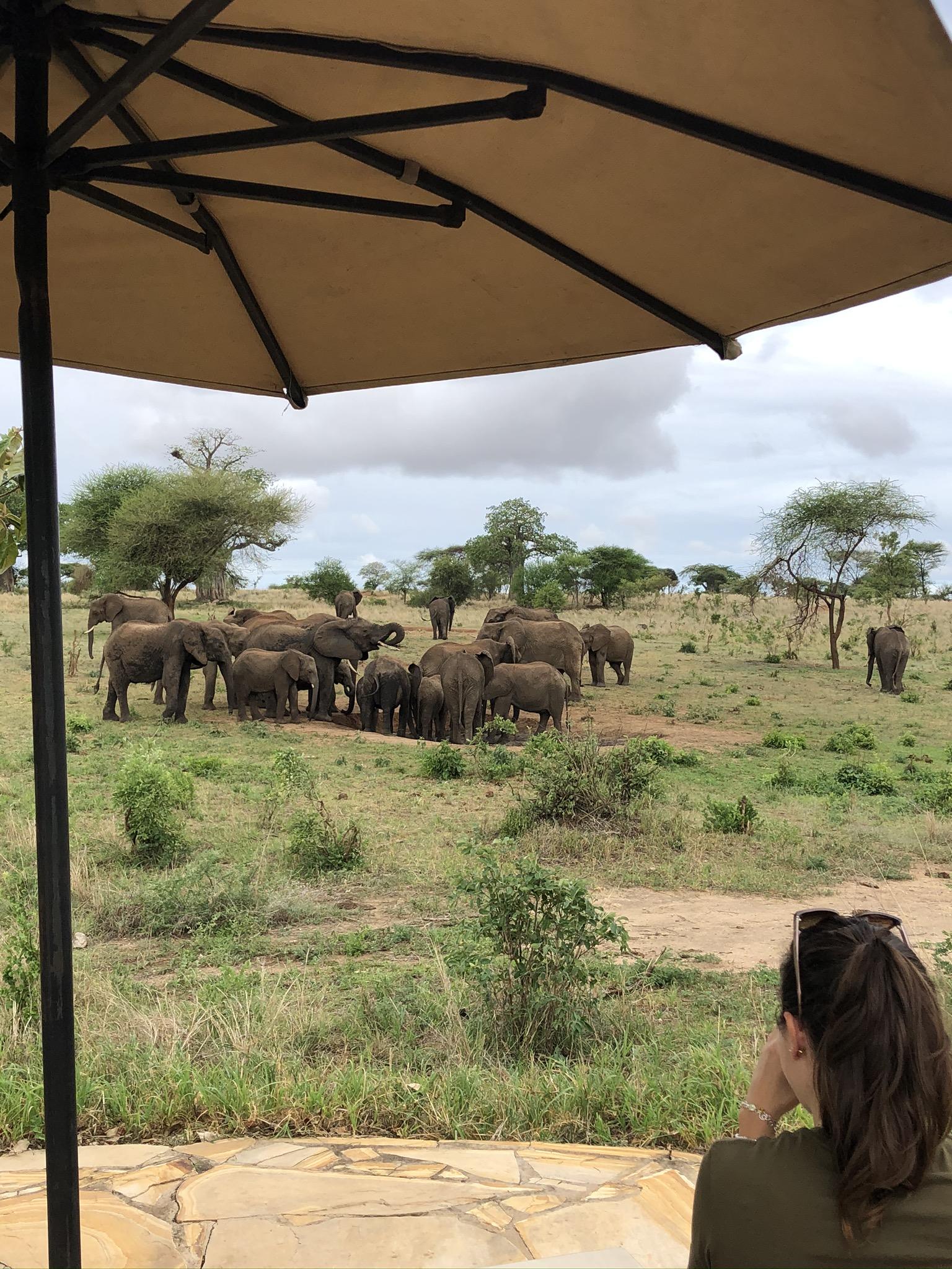 Nimali Africa fam trip 2019 with Helen & Sally