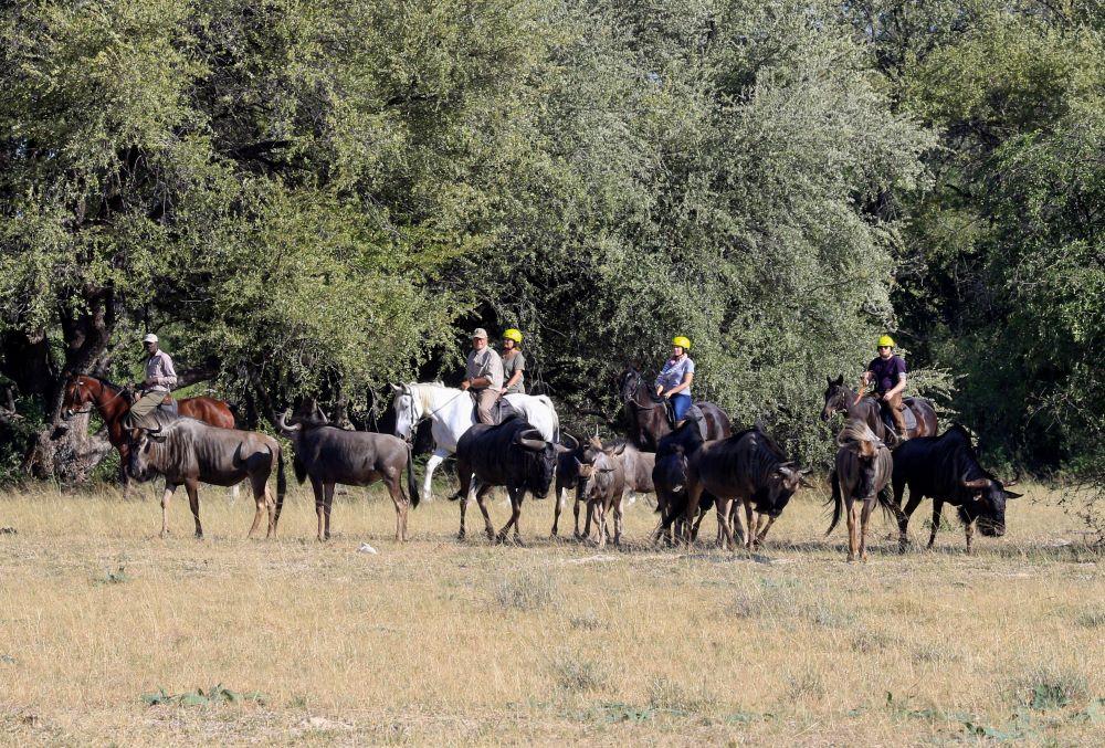 Horse riding Hwange