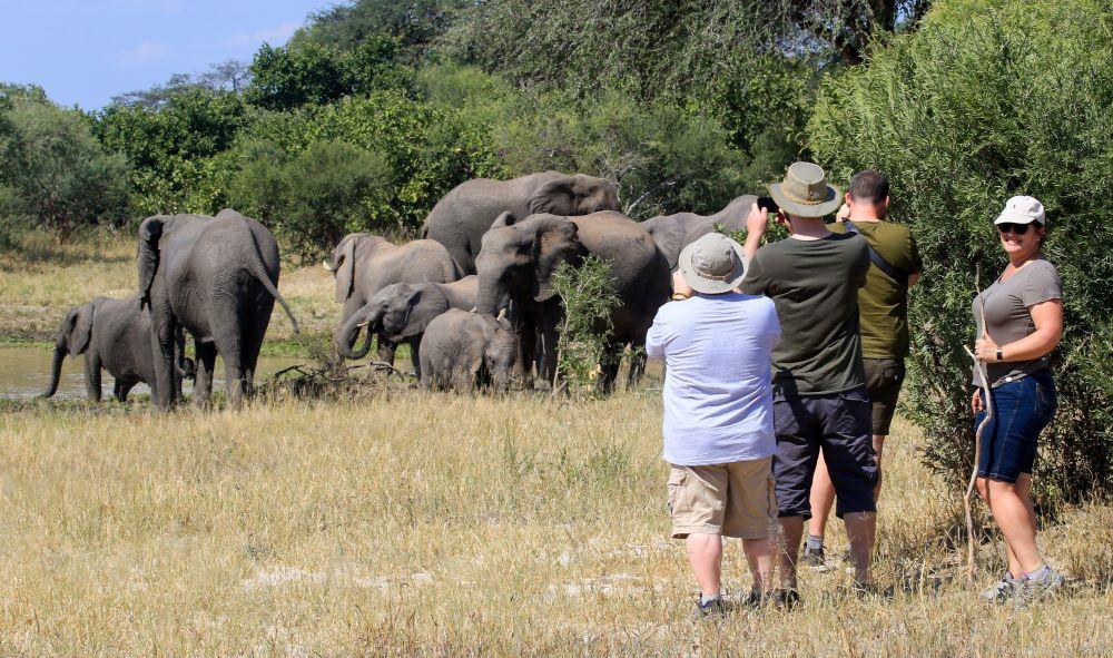 Elephant at Jozibanini Hwange
