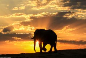 Imvelo Safari Lodges Nehimba Sunset
