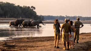 Remote Africa Safaris Zambia